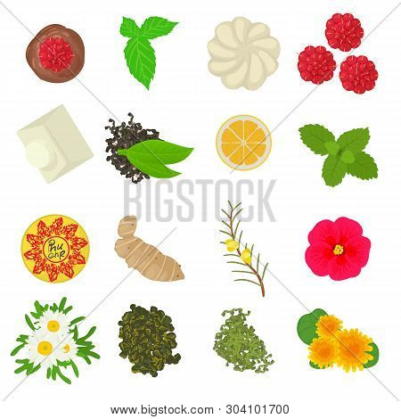 Herbal Seasoning Icons Set. Cartoon Set Of 16 Herbal Seasoning Vector Icons For Web Isolated On Whit