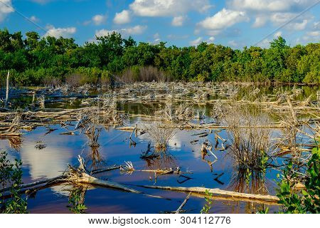 Swamp Cover With Floating Dead Trees On Little Cayman Island