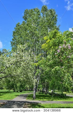 Sunny Spring Day In The Park With The Bird Cherry Trees, Lilac And Rowan In Full Bloom. Play Of Ligh