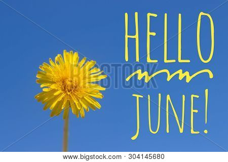 Banner Hello June. New Season . Welcome Card Photo With A Flower. Yellow Flower. Yellow Dandelion Ag