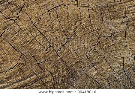 Wood Cracked Pattern by Cut Cross Section poster