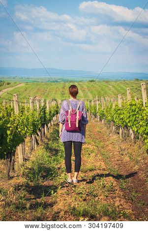 Traveler Girl Walking Through Vineyards. Young Girl Traveler Walking In Nature. Traveler With Backpa