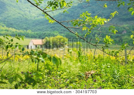 Small House In Countryside Landscape. Fields And Countryside Landscape.small House In Nature On Gree