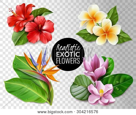 Raelistic Exotic Flowers Transparent Background Set. Collection Of Tropical Flowers On Transparent B