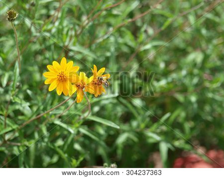 Small Blooms Of A Yellow Flower Stand Out Against Green Leafs.