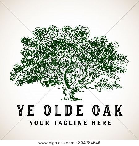 Tree Logo - Vintage Style Illustration Of An Oak Tree