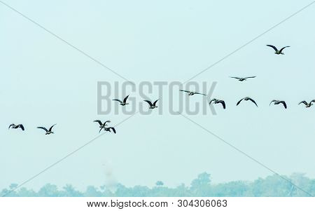 A Flock Of Flying Birds Returning To Home Flying Over Head While Migrating To Their Breeding Grounds