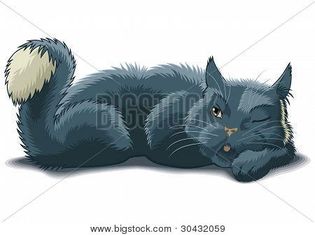 Watching Cat