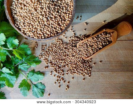 Coriander Seeds, Fresh Green Cilantro Leaves On Wooden Background. Coriander Seed In Bowl & Cilantro