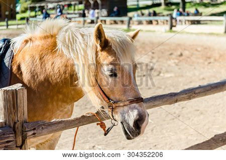 Pony With A Hair. Funny Pony On A Farm. Pony Portrait