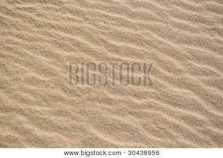 Coast.Sandy dunes.
