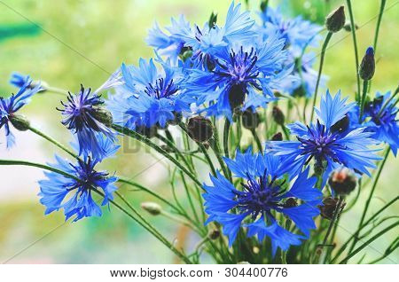 Cornflowers Flowers. Blue And Blue Flowers. Cornflower Bouquet