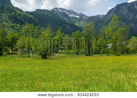 Colorful Spring Meadow Panorama At The Bohinj Lake Village Ukanc. Picturesque Moning Scene In The Tr