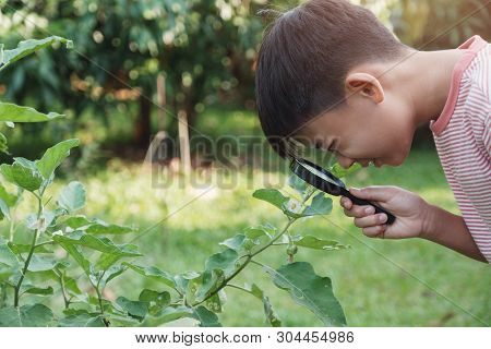Tween Asian Boy Looking At Leaves Through A Magnifying Glass, Montessori Homeschool Education, Plant