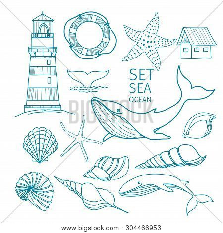 Set of marine objects - Shells, whale tail, Starfish, lifeline, whale, house, lighthouse. Hand-drawn illustration, sketch. poster