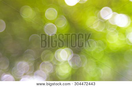 Green Bio Background, Abstract Blurred Foliage Bright Sunlight. Organic Design Nature Abstract Backg