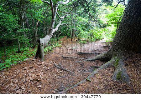 Path on the Petrova island. State Nature Reserve Lazovskiy. Primorsky Kray. Russia.