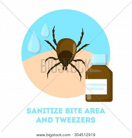 How To Remove A Mite Insect. Brown Parasite, Risk Of Encephalitis