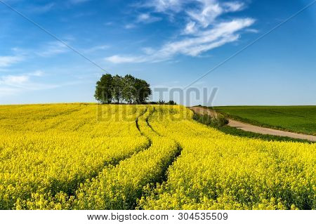 View Along A Farm Road Of Flowering Yellow Canola