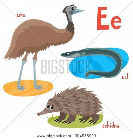 Vector Illustration Of Emu, Eel And Echidna Isolated On White.
