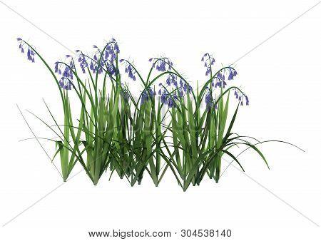 3D Rendering Bluebell Flowers On White