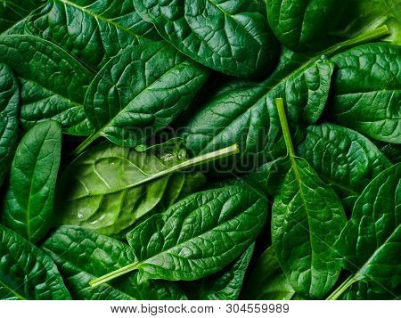 Pattern From Baby Spinach Leaves. Fresh Green Baby Spinach. Top View Or Flat Lay. Can Use For Design