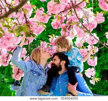 Happy Couple Of Dad, Mom And Son. Little Boy Kissing Mom Under Sakura Blossom Tree. Young Lovely Fam