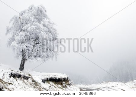 Lonely Tree And Road In Fog At Mountain Tien Shan