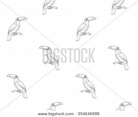 Vector Seamless Pattern Of Flat Cartoon Toucan Tropical Bird Isolated On White Background