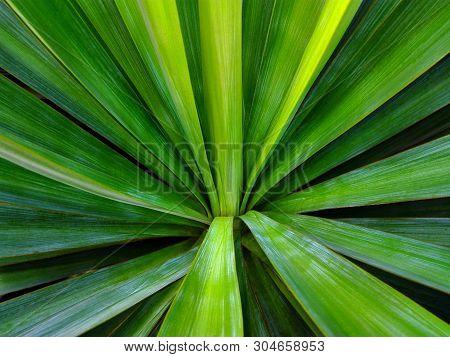 Green Tropical Leaf Background. Striped Leaf Abstract Green Tropical Background Texture Simple Patte