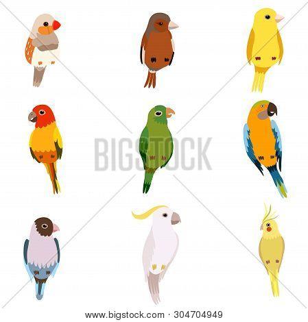 Little Birds Set, Amadin, Sparrow, Canary, Parrot, Cockatoo, Cute Home Pets Vector Illustration