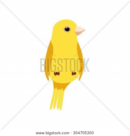 Little Canary Bird, Cute Yellow Budgie Home Pet Vector Illustration
