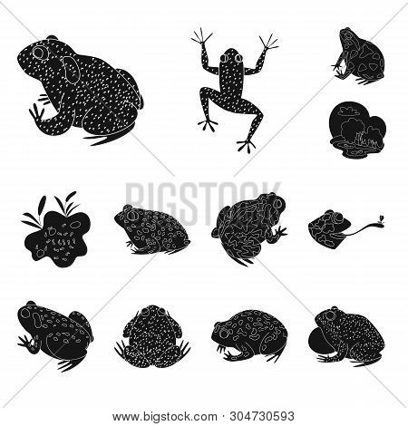 Vector design of fauna and reptile symbol. Set of fauna and anuran vector icon for stock. poster