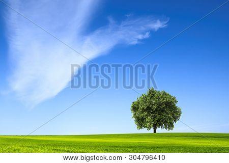Single tree on the grass field