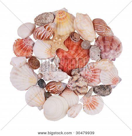 Handful Of Seashells And Starfish