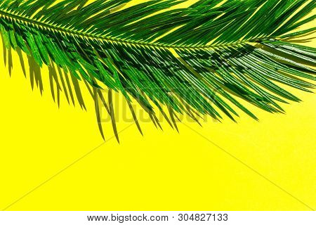 Beautiful Feathery Green Palm Leaf On Vibrant Yellow Wall Background. Summer Tropical Creative Conce