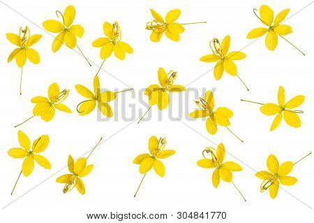 Cassia Flower, Cassia Flower Top View  Isolated On White Background.