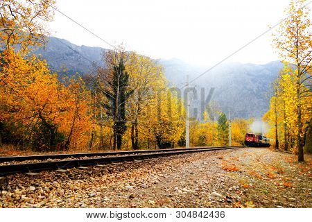 Passenger Train on countryside landscape in between colorful autumn leaves and trees in forest of Mersin, Turkey
