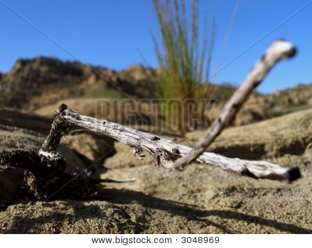 Close Up Shot Of Dried Twig
