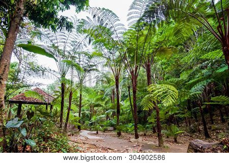 Big Tree Fern On Rain Forest At Siriphum Waterfall With Stone Walkway And Pavilion At Doi Inthanon N