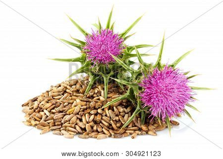 Seeds Of A Milk Thistle With Flowers (silybum Marianum, Scotch Thistle, Marian Thistle ) Close-up On