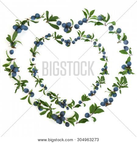 Abstract heart shaped sloe berry wreath on white background also known as blackthorn. Pruna spinosa.