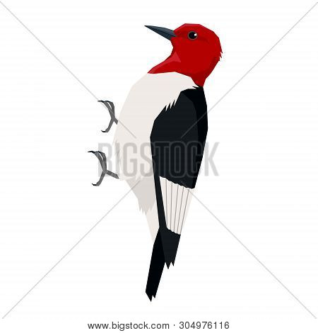 Red Headed Woodpecker Birds Collection Vector Illustration Isolated Object Set