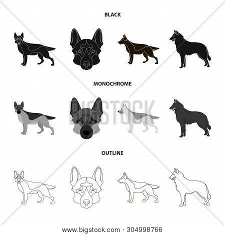 Vector Design Of Sheepdog And Sheltie Sign. Set Of Sheepdog And Shepherd Stock Symbol For Web.