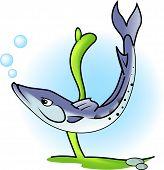 Great barracuda fish in action. Underwater scene. poster