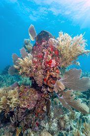 Coral Garden In Caribbean Off The Coast Of The Island Of Raotan