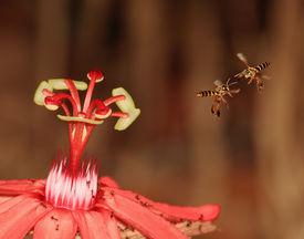 Zwei Bienen und eine Blume