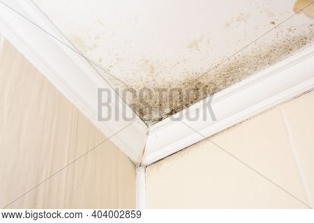 Black Mold In The Corners Of The House On A White Ceiling, A Harmful Environment For Asthmatics
