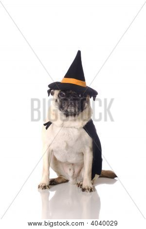 Pug Dog In Witch Costume