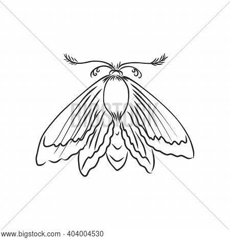 Hand Drawn, Sketch, Cartoon Illustration Of Moth. Moth Moth Vector Sketch Illustration